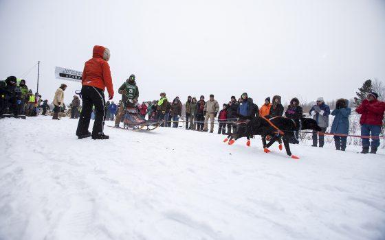 Apostle Islands Sled Dog Race