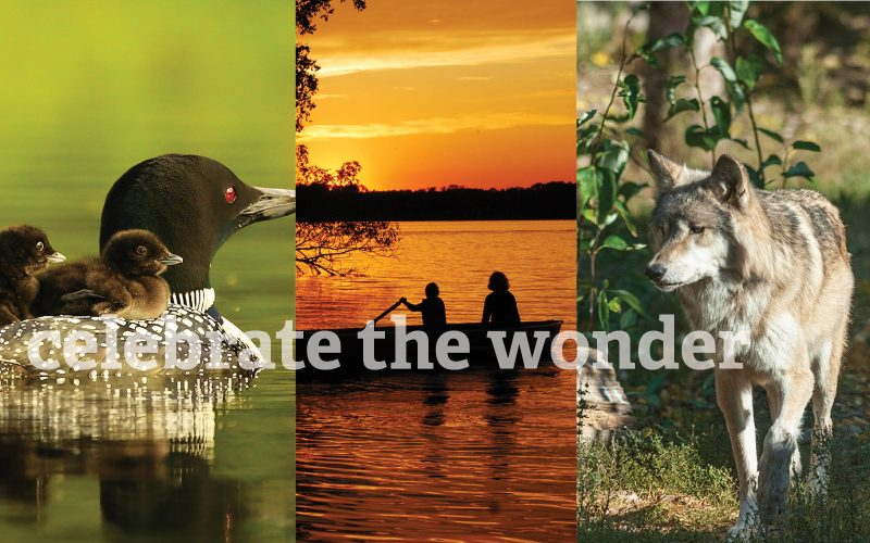 Three images of LoonWatch, Timber Wolf Alliance, and the Sigurd Olson Environmental Institute