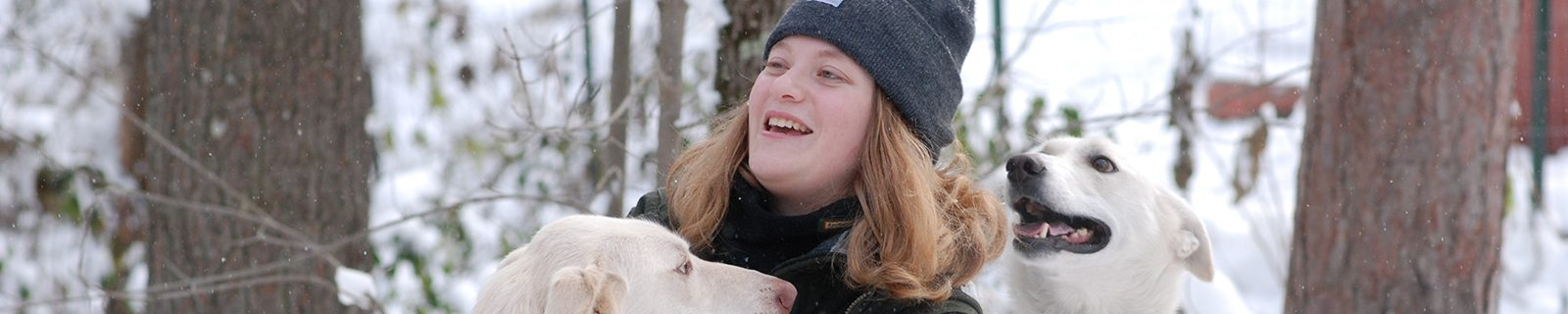 Northland College student Katie Tapper harnesses a sled dog.