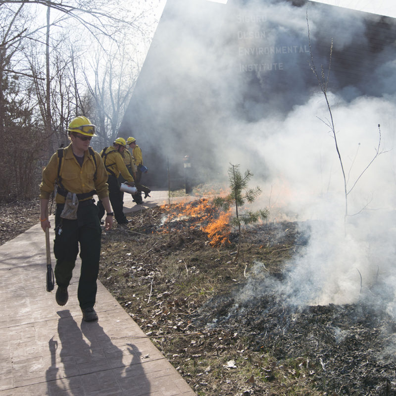 Northland College student works on fire crew to do prescribed burn on campus.