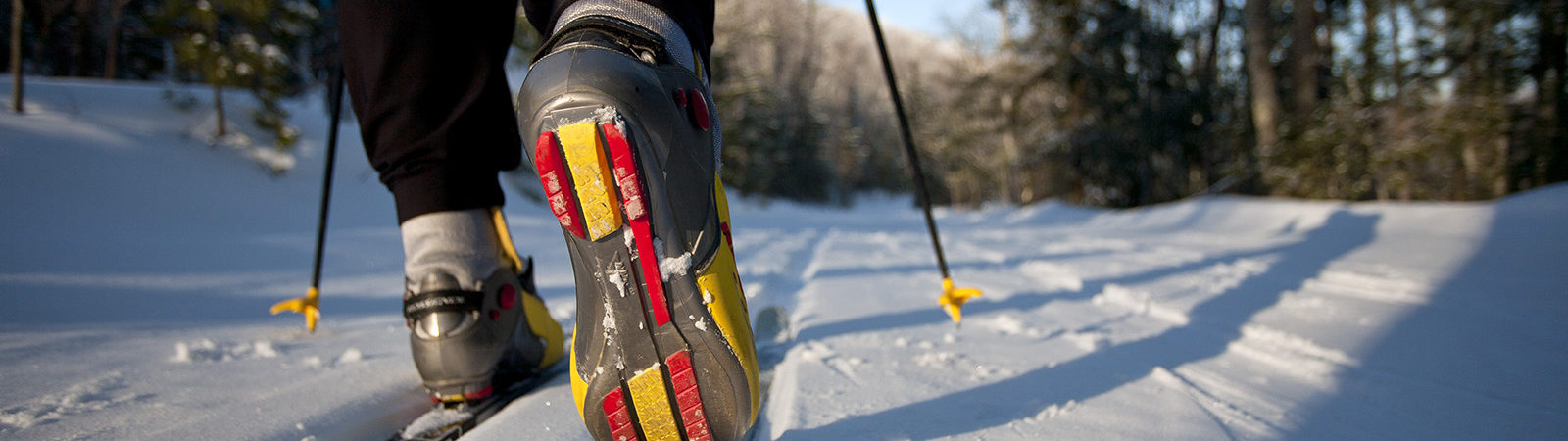 Northland College Nordic Skiing