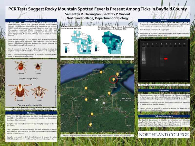 PCR tests suggest Rocky Mountain Spotted Fever is present among ticks in Bayfield County